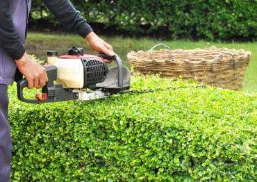 Gardening Calendar: What to do in October