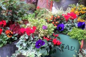 In-the-Garden-Containers-11