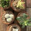 aerial view cactus