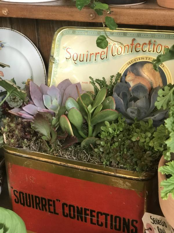 succulent plants planted in red vintage tin