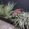 Flowering foliage plants in window boxes