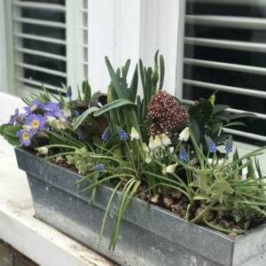Spring flowering window box in mock steell container
