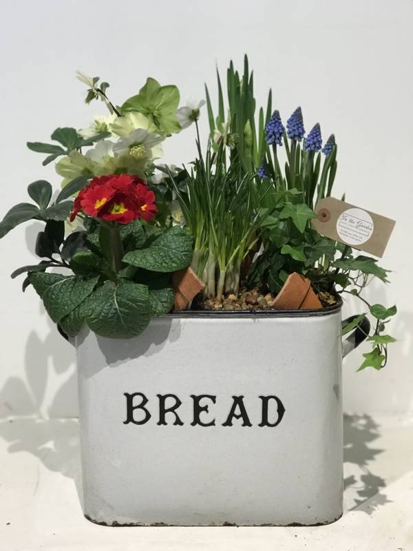 Enamel bread bin planted with spring colour and bulbs