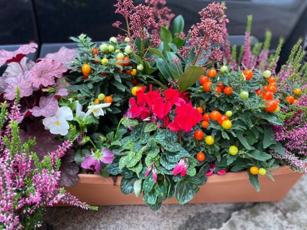 Autumnal window box replanted with rusty tones and foliages