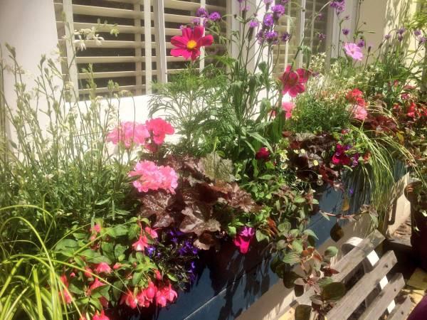 soft palette summer window box in Belgravia