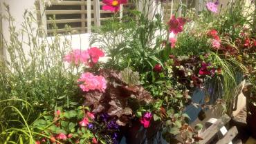Window Boxes & Outdoor Container Planting