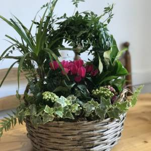 indoor gift basket with jasmine