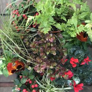 red and green window box mixed plants