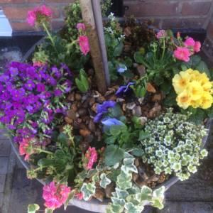 spring underplanting fresh