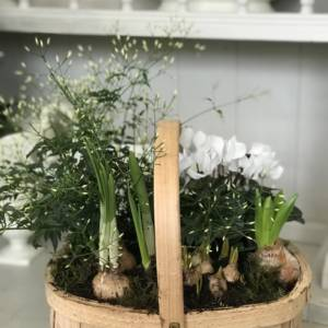 white planted trug arrangement mothers day gift