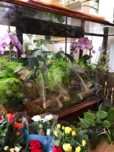 Glass shop counter display. Orchid plants and ferns