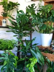 Oxygenated indoor plants London