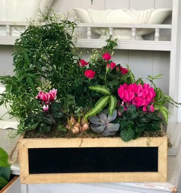 Indoor planted gift arrangement in wooden box