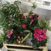 Pink planted arrangement in wooden box, including jasmine roses, cyclamen, ferns, ivy and succulent
