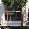 Perfect plants to display at your front door or patio containers