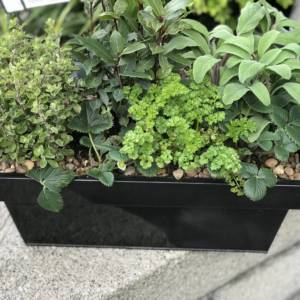 HERB WINDOW BOX IN BLACK WINDOW BOX