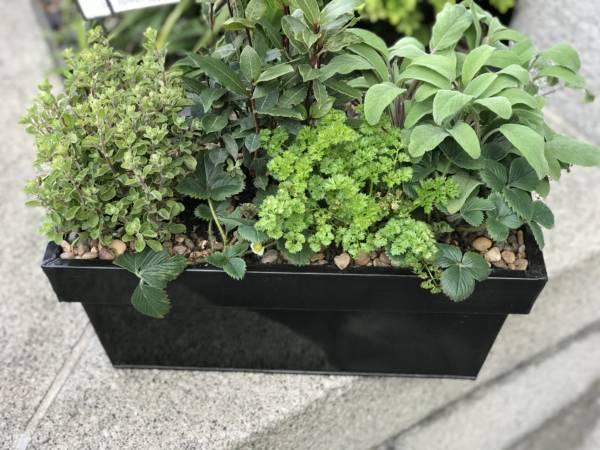 HERB WINDOW BOX IN BLACK WINDOW BOX