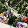 English grown Violas, mixed colours