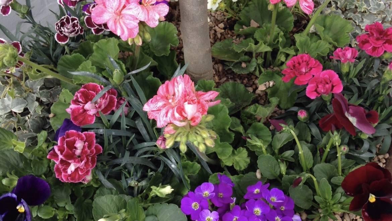 SNEAK PEAK PLANT LIST 05/05/2020