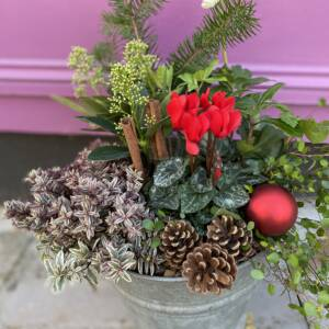 Outdoor Christmas planter in vintage galvanised bucket