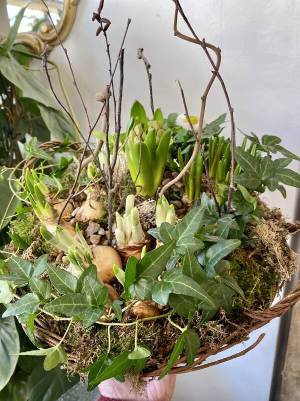 Indoor spring garden gift perfect for Mother's Day 2021 in West Hampstead, London, North Kensington and Notting Hill